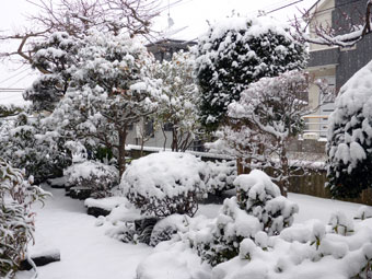 Tokyo's heavy snow in 20 years on February 8, 2014