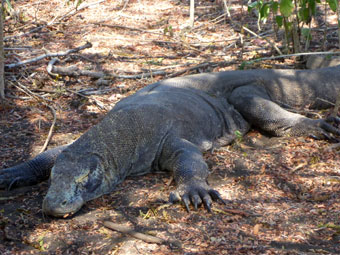 Komodo National Park, Rinca Island