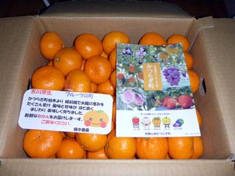 和歌山県伊都郡かつらぎ町ふるさと納税お礼品