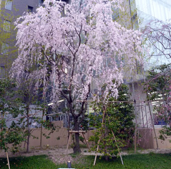 2011年4月2日 京都