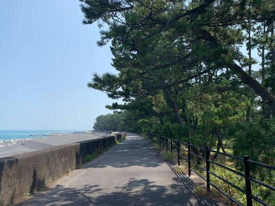 三保松原 太平洋岸自転車道